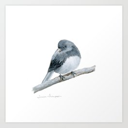 The Bashful Black-Eyed Junco by Teresa Thompson Art Print