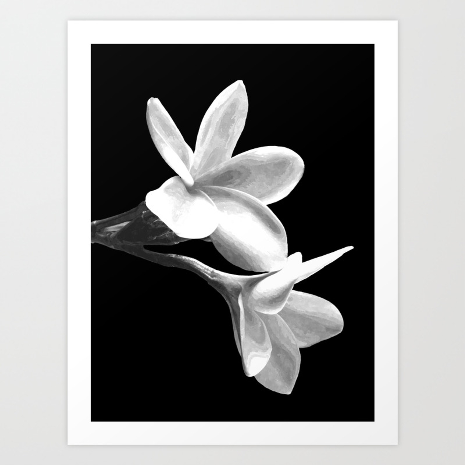 White flowers black background art print