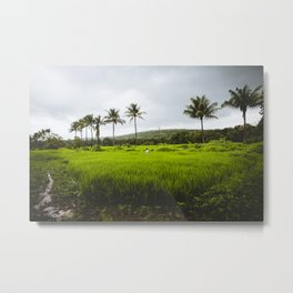 Woman in a rice field in India #1 Metal Print