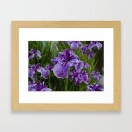 Garden Party (irises) Framed Art Print