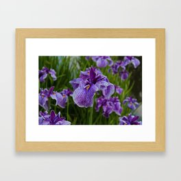 Garden Party (irises) Framed Art Print