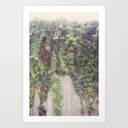 Rustic Vines Art Print