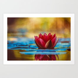 Red Water Lily with Blue Reflections Art Print