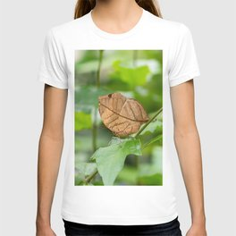 Orange oakleaf, Indian oakleaf or dead leaf, is a nymphalid butterfly T-shirt