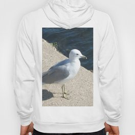 Seagull, Lake Michigan, Shoreline Hoody