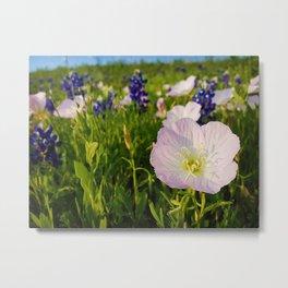 Pink Evening Primrose - Texas Wildflowers Metal Print