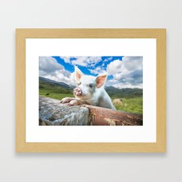 Cute White Pig Looking Over Wall Framed Art Print