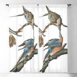 Passenger pigeon, Birds of America, Audubon Plate 62 Blackout Curtain