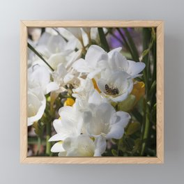 Bee on its back Framed Mini Art Print