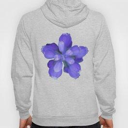 Muscari armeniacum(Armenian grape hyacinth) Hoody