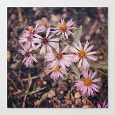 Colorado Purple Asters Canvas Print