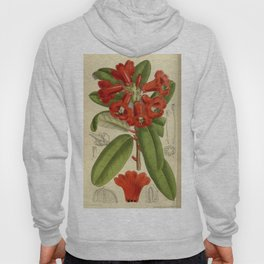 Rhododendron neriiflorum 143 8727 Hoody