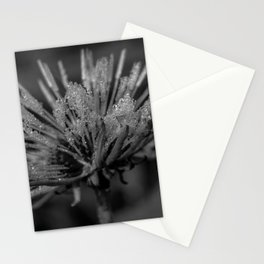 Black and white dandelion covered by raindrops Stationery Cards