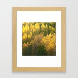 Forest In Sunset Tones Framed Art Print