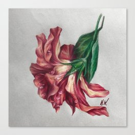 """Hibiscus"" Drawing Canvas Print"