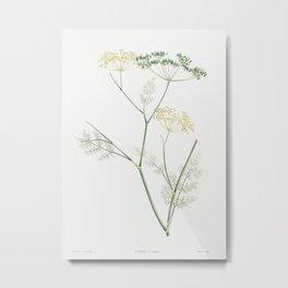 Fennel flowering plant from La Botanique de J J Rousseau by Pierre-Joseph Redoute (1759-1840) Metal Print