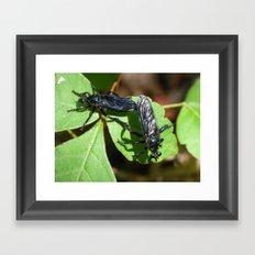 fly sex Framed Art Print