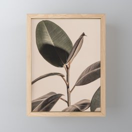 Rubber Plant Fig. 03 Framed Mini Art Print
