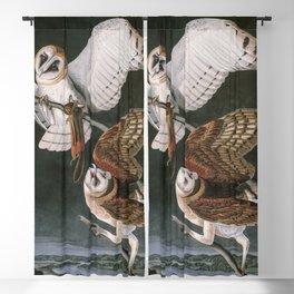 Barn Owls, the Birds of America by John James Audubon Blackout Curtain