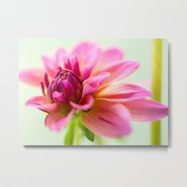 My Blooming Day Metal Print