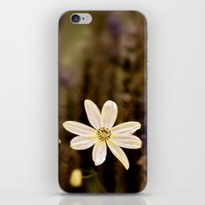 The last flower of Summer iPhone & iPod Skin
