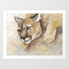 Captivated Mountain Lion Art Print