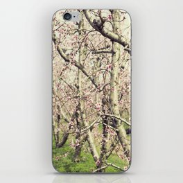 Peach Trees iPhone Skin