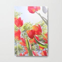 Tiptoe Through The Tulips Metal Print
