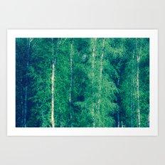 the birch forest I Art Print