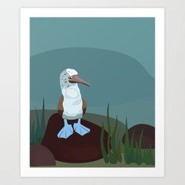 Blue-footed Booby in the wild. Art Print