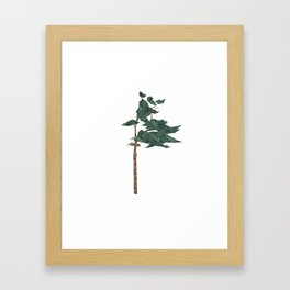 Shelter - Pine Tree Framed Art Print
