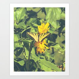 Butterfly & Flowers Art Print