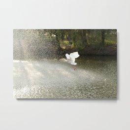 White Ibis on Takeoff Metal Print