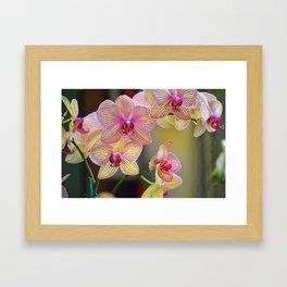 Veined orchid blooms Framed Art Print