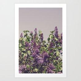 Wild Lilacs Art Print
