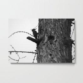 Wood Pecking Metal Print