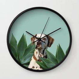 Dalmatian between Agave Leaves Wall Clock