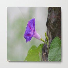 Blooming bell # 2 Metal Print