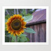 Autumn Sunflower Art Print
