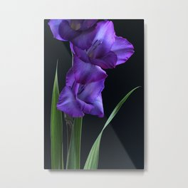 Ultra Violet Gladioli Metal Print