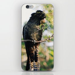 Red-Tailed Black Cockatoo in the Swan Valley iPhone Skin
