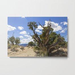Twisty Tree Metal Print