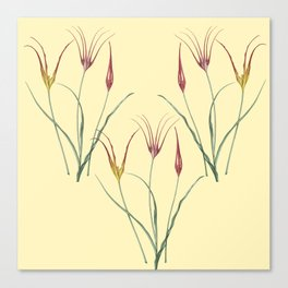 Tulip togetherness Canvas Print