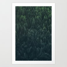 A very dense location of the mountain forest on the alpine altitude Art Print