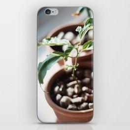 planter iPhone Skin