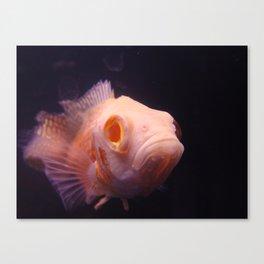 Kiss a Fish Canvas Print