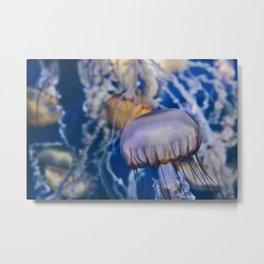 Jellyfish in Blue Metal Print