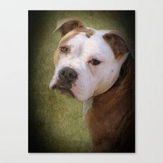 Hunde Augen Canvas Print