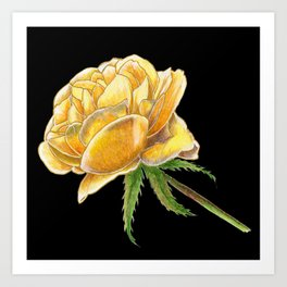 Yellow Rose on black Art Print