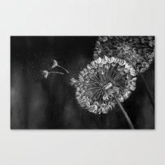 Dandelions, black & white Canvas Print